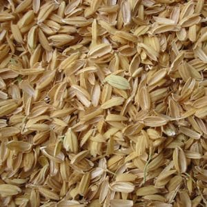 Rice hulls are an unusual bedding material for horses but a good choice though