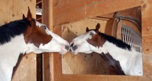 A horse safe mirror will help to reduce your horse's loneliness, boredom and even his stress levels