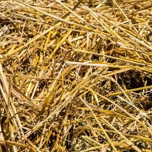 Straw is the most commonly used bedding for horses