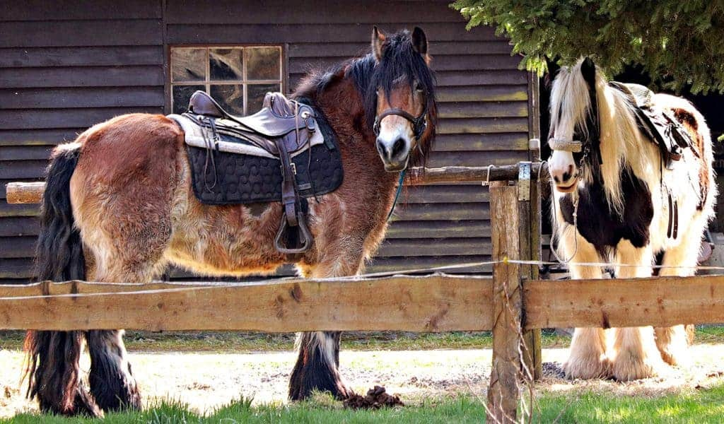 What size horse should you be riding?