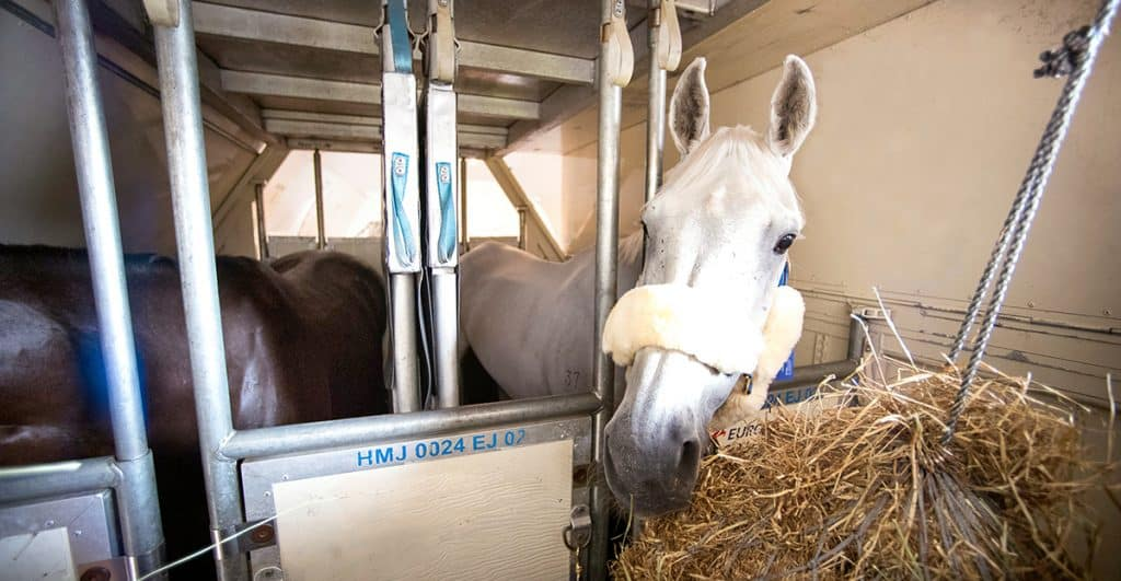 How do you transport a horse around the world?