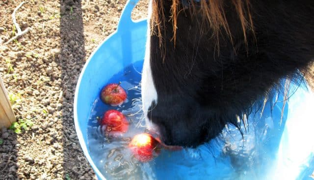 Putting apples in your horse's water can help to keep him occupied for a long time