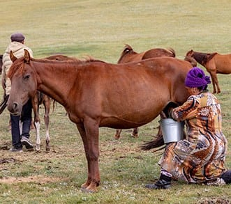 The most unusual horse breeds in the world - Kyrgyz