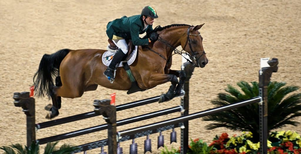 Best breeds for jumping, at all levels