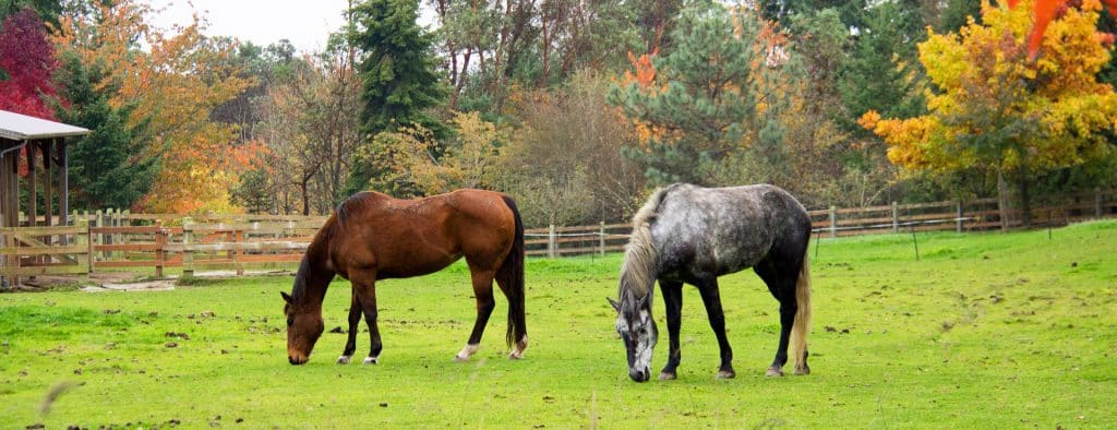 Keeping a horse in your back yard