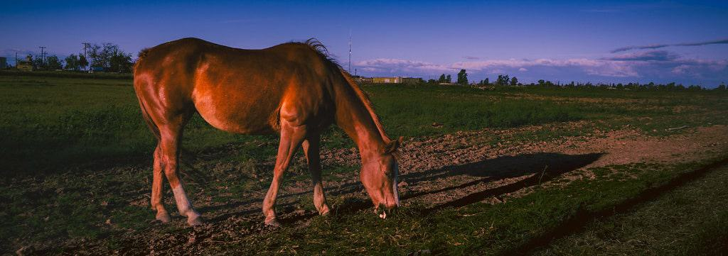 Where is the best place to keep your horse at night?