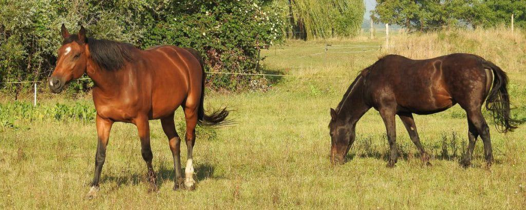 It can be difficult to care for horses with arthritis