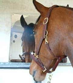 A horse safe mirror can help to relax your horse and make him feel like he has company