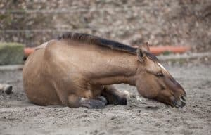 Rolling can be a sign of colic in horses