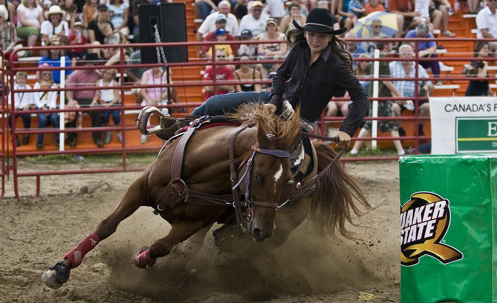 The best horse breeds for barrel racing