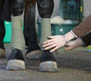 Using exercise boots can protect your horse's legs and keep then dry
