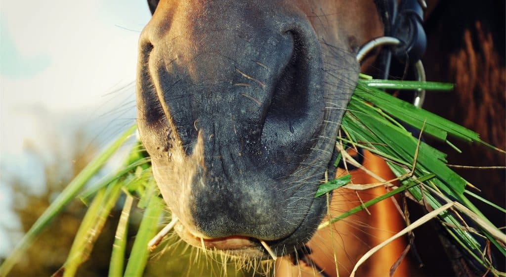 7 things your horse should be eating