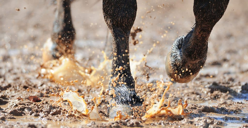 Everything you need to know about mud fever in horses
