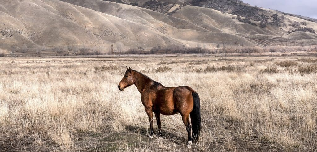 Horse Factbook - Keeping A Horse Alone – 9 Tips To Prevent Loneliness
