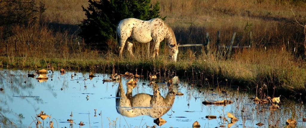 Mosquitoes can cause a real problem for horses