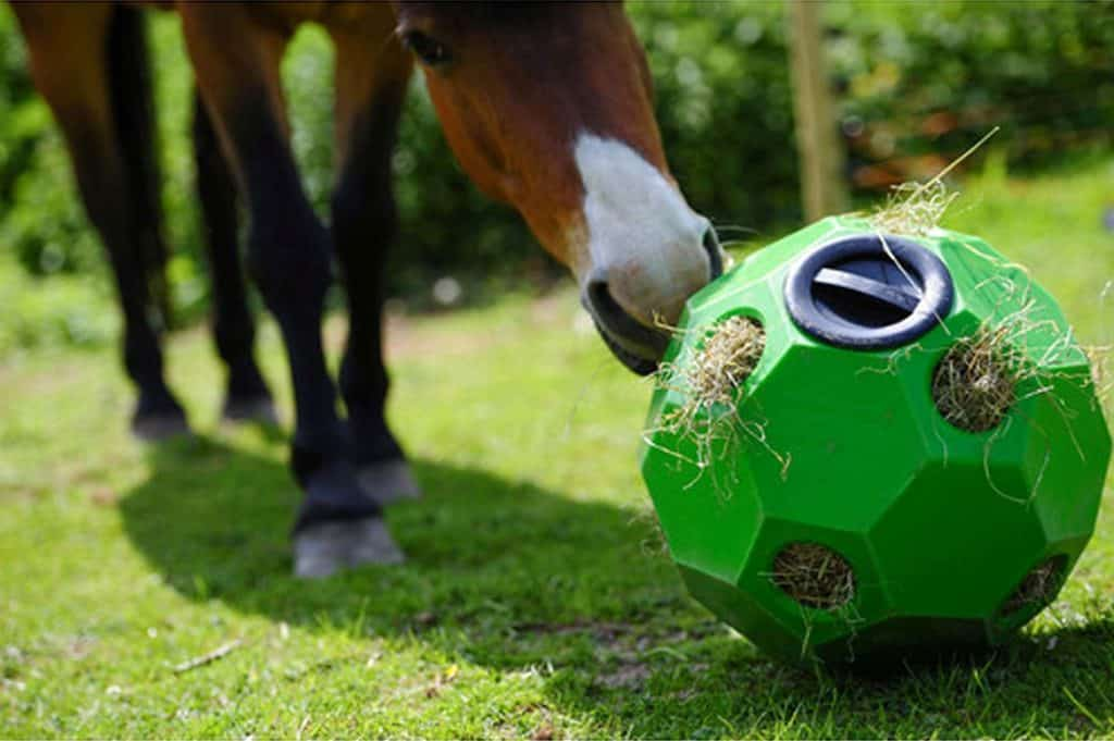 Keeping your horse buy will stop him getting bored