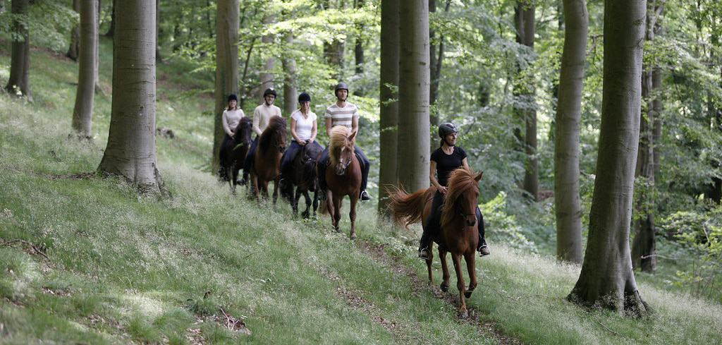 Group rides are a great way for you and your horse to make new friends