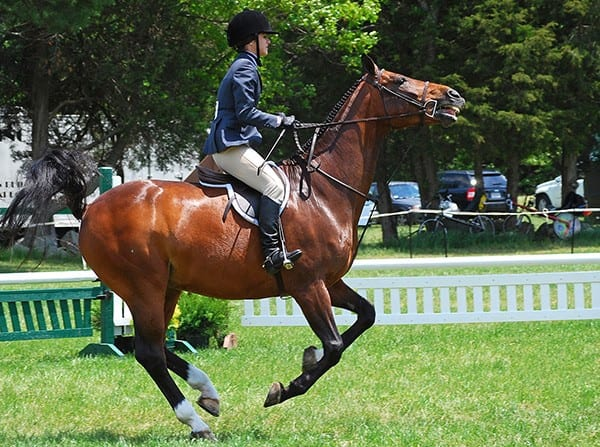 Improving your horse's confidence can help both of you
