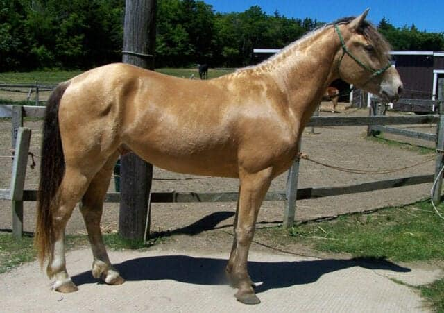 Champagne horses are rare and can be most colors with at least one cream gene