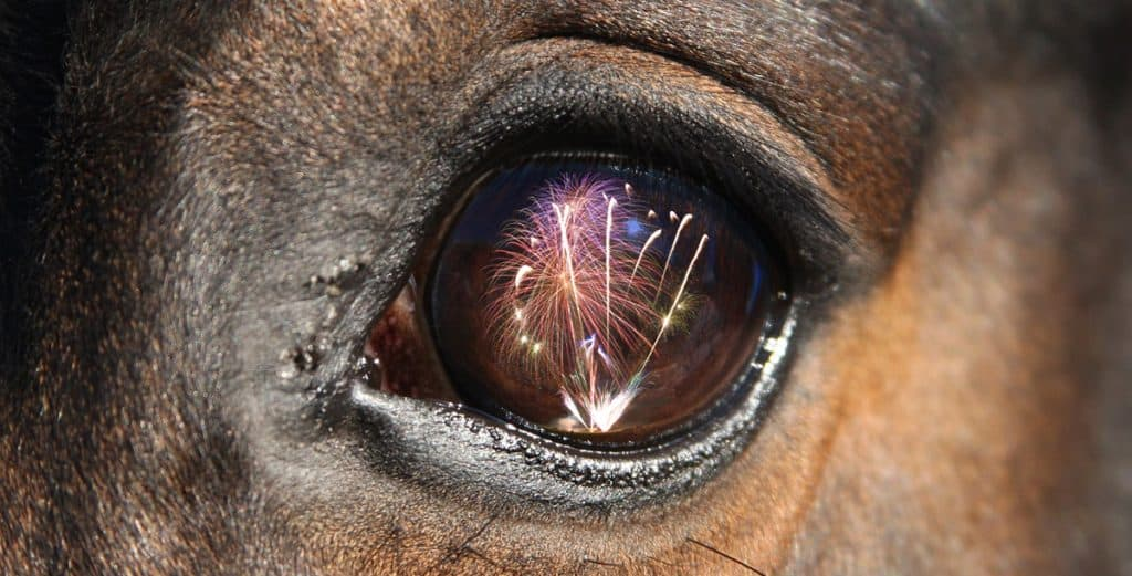 Fireworks can be frightening for horses