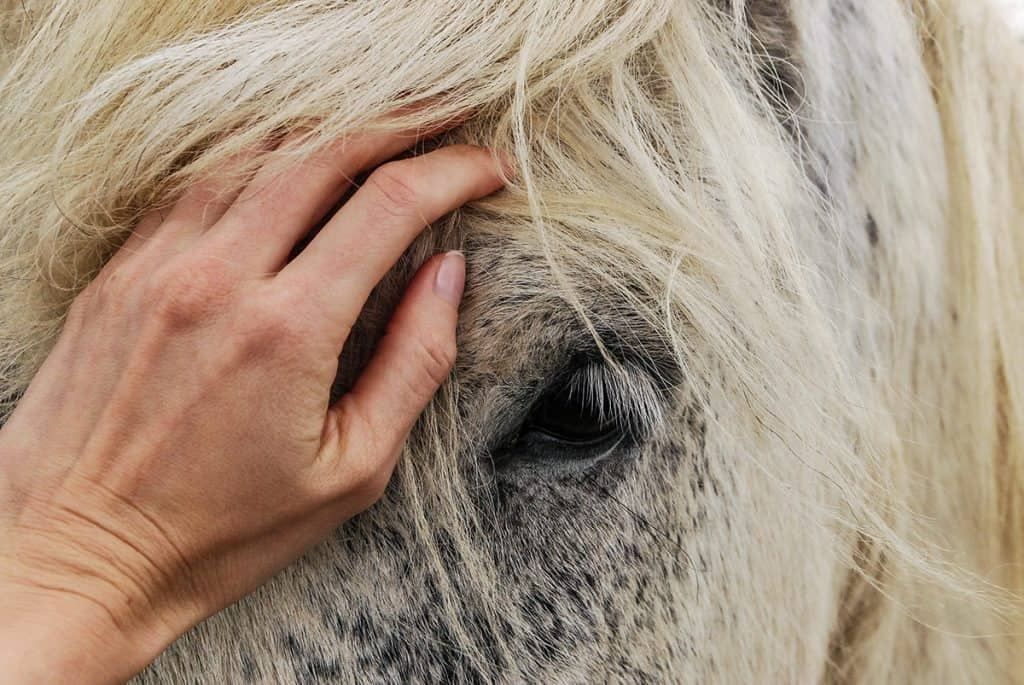 The morning after any local firework display check your horse for signs of injury