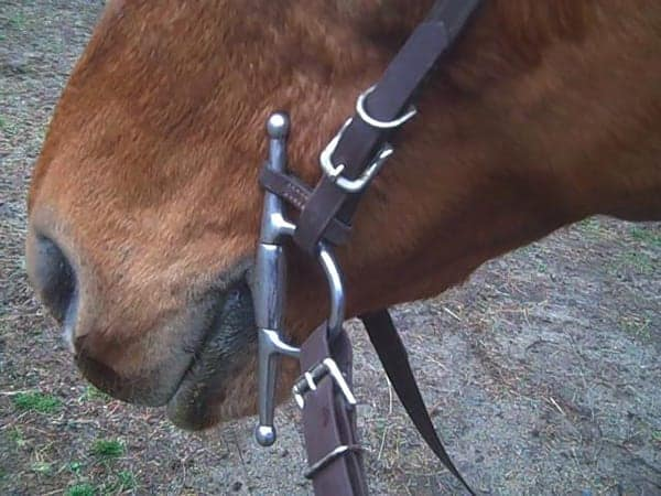 A full cheek bit with the top cheek fixed to the bridle