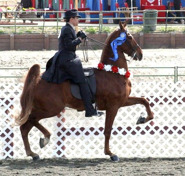 Some horse shoes are used as a training aid