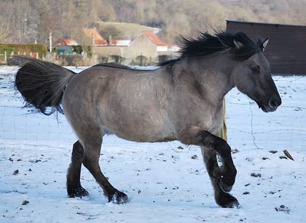 The dun horse color comes in a range of shades