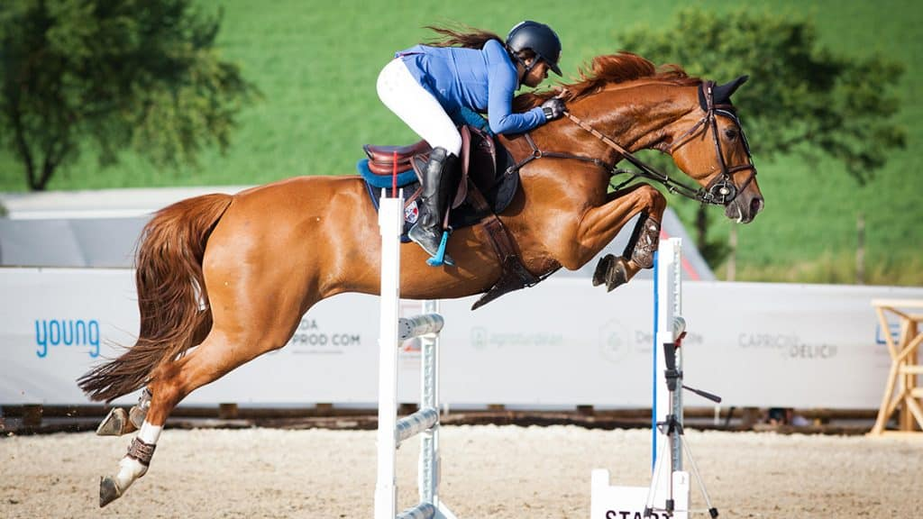 As a rule jumping horses always way shoes