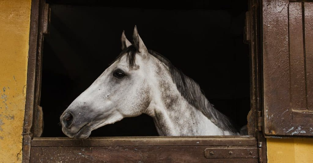 Don't change your horse's routine just because its firework season