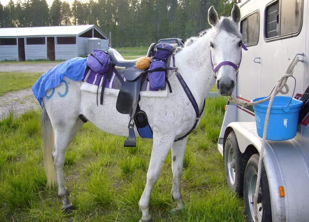 You should carry a first aid kit with you when horse riding away from the yard