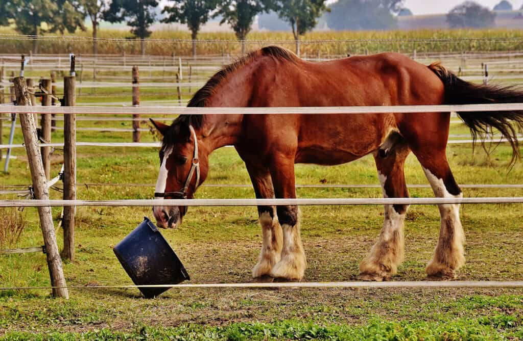 You can manage Equine Cushing's Disease with diet amongst other things