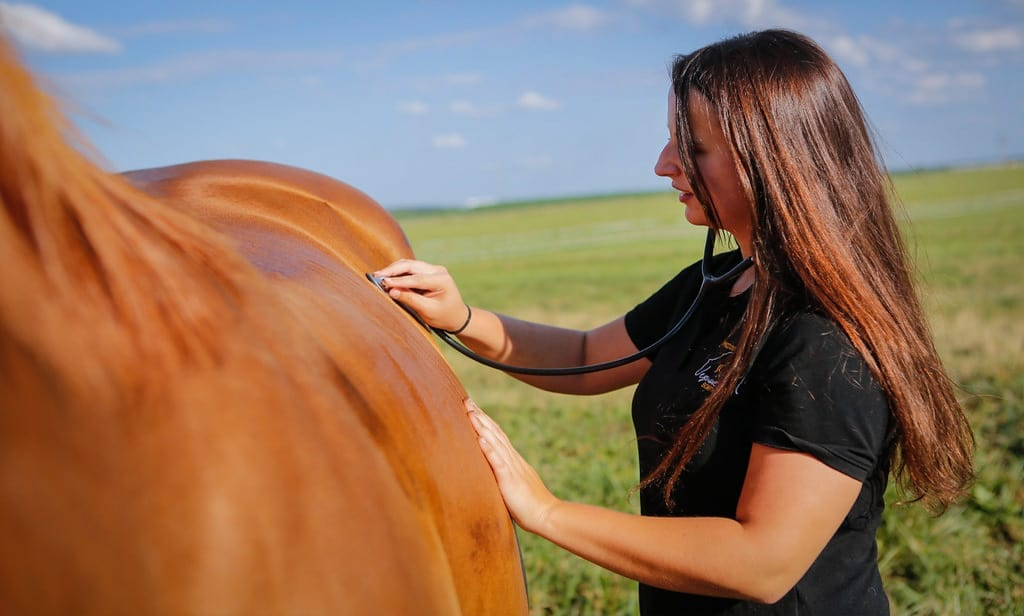 Every horse owner should have their own first aid kit