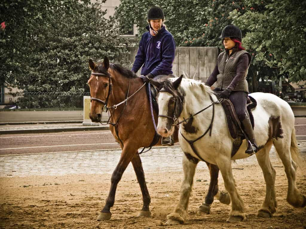 Can you still ride a horse if they have Equine Cushing's Disease?