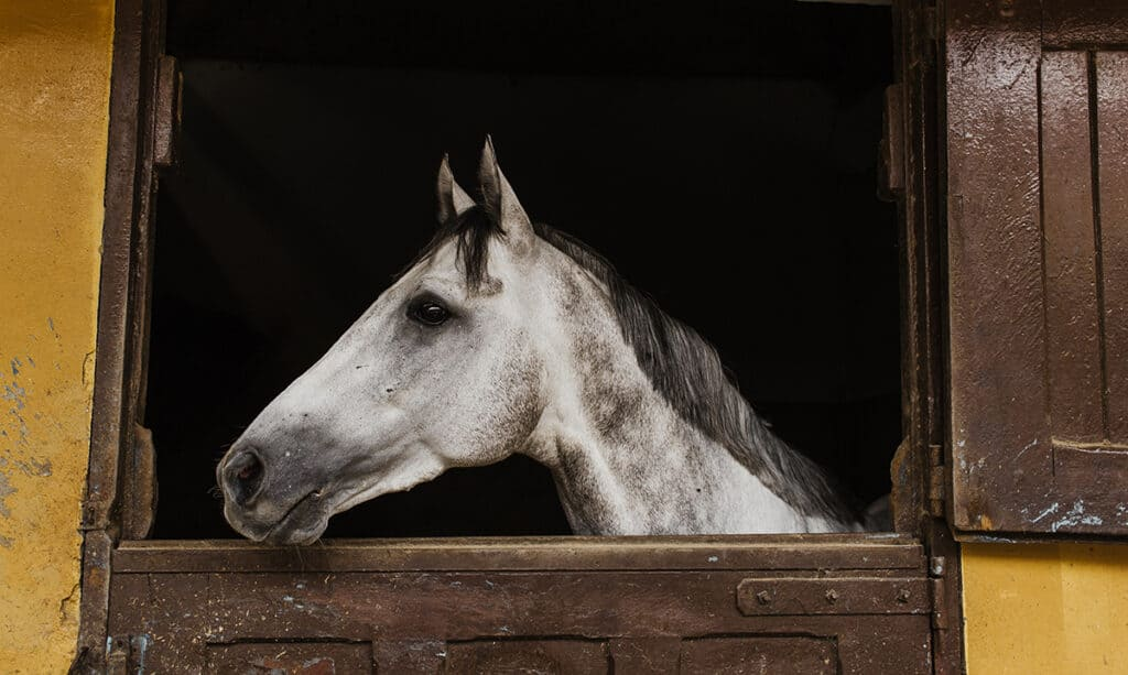When selling your horse its important to know they're going to a good home