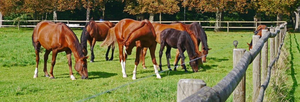 A good fence will help to keep your horses safe