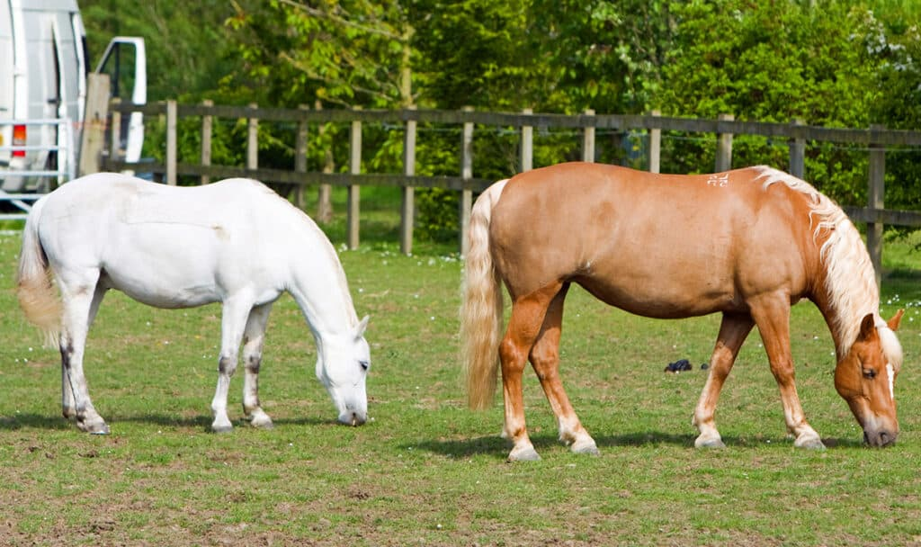 It's important to know how much your horse weighs and how much they should weigh