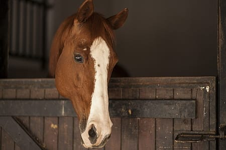 Horses will need to recover after any surgical procedure
