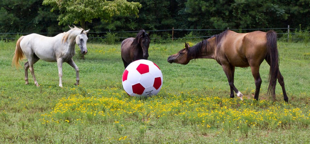 A horse football will encourage your horse to move