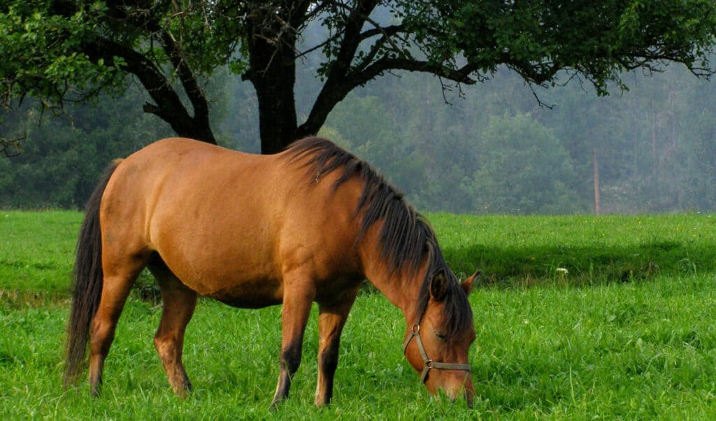 Managing your horse's weight