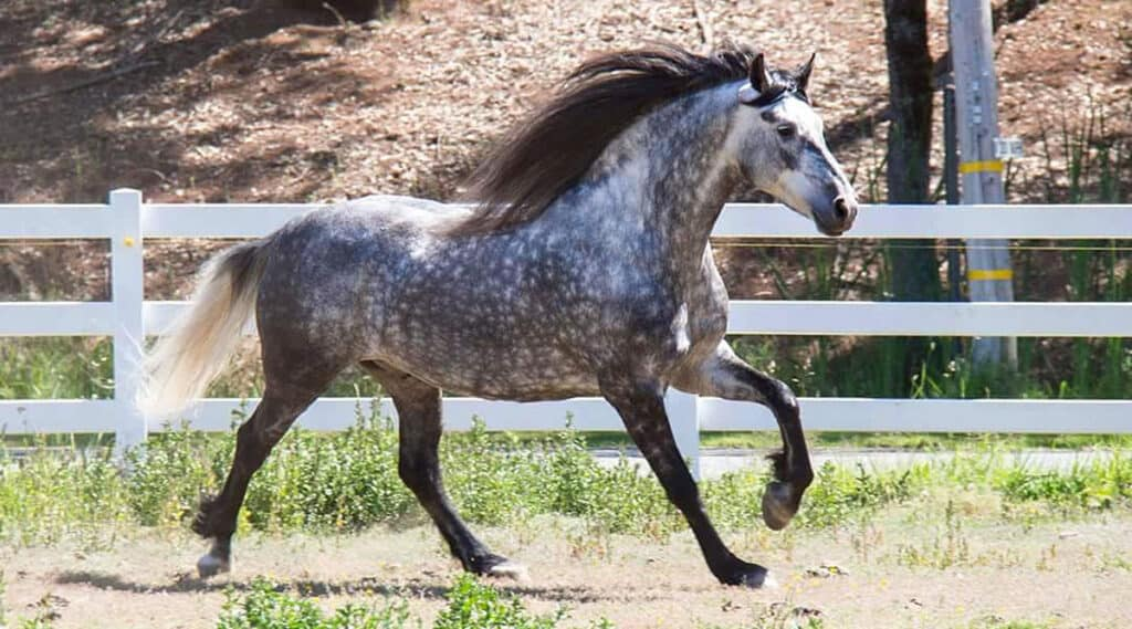 How much should a horse weigh?