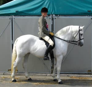 The versatile Connemara Pony is highly suited to children