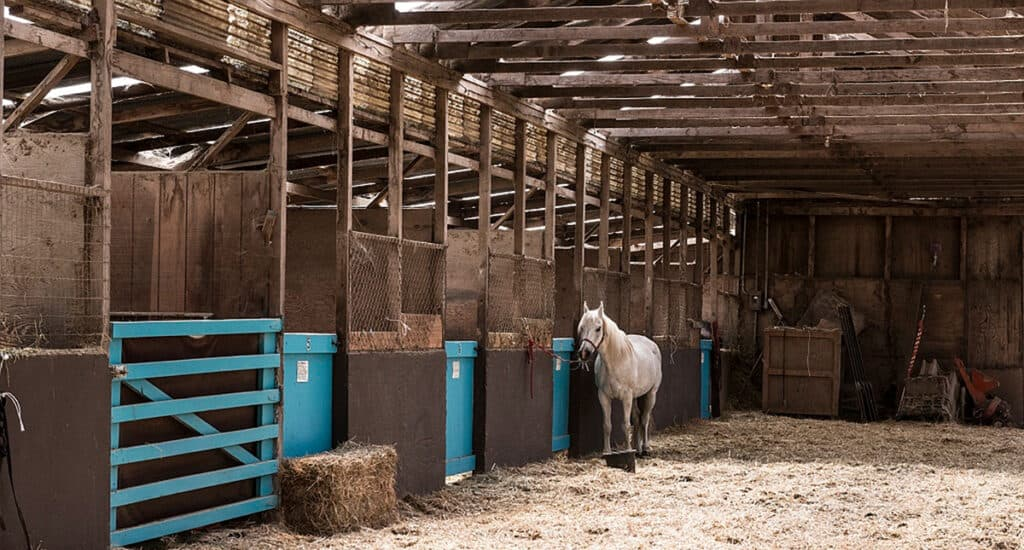 Barns can be great for housing multiple horses