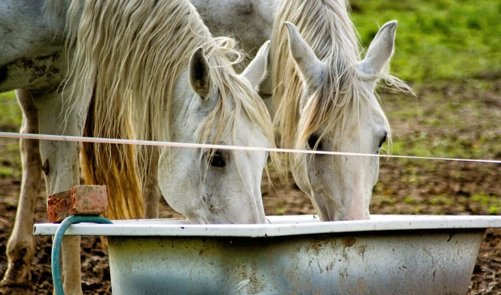 Check your horse's water during the winter to make sure its not frozen over
