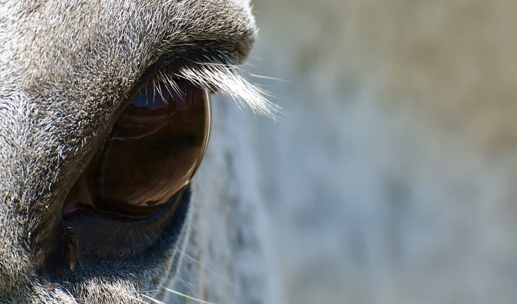 How does the world look to your horse?