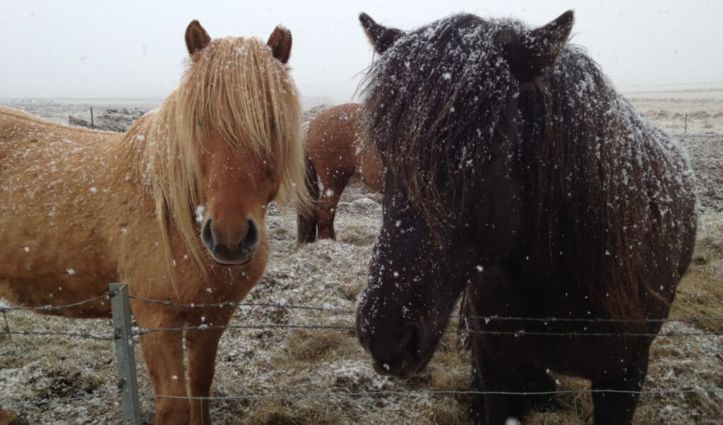Horses are pretty hardy and don't always need to be stabled during the winter