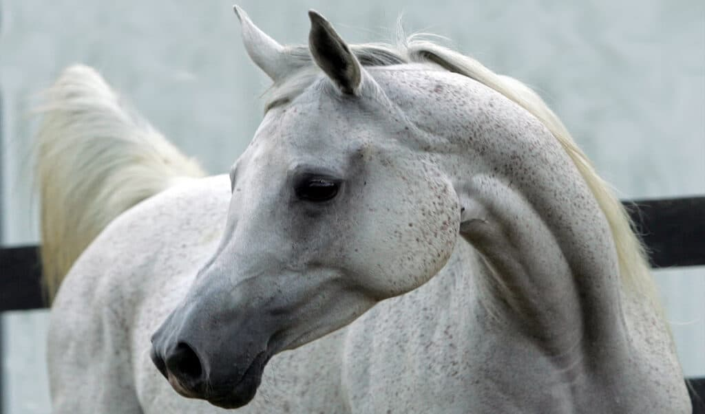 The most expensive horse breeds in the world