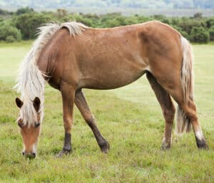 The hardy New Forest Pony is a great choice for children