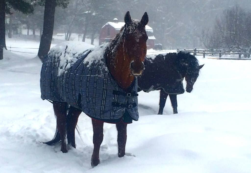If your horse lives outside then he may need a rug when it snows