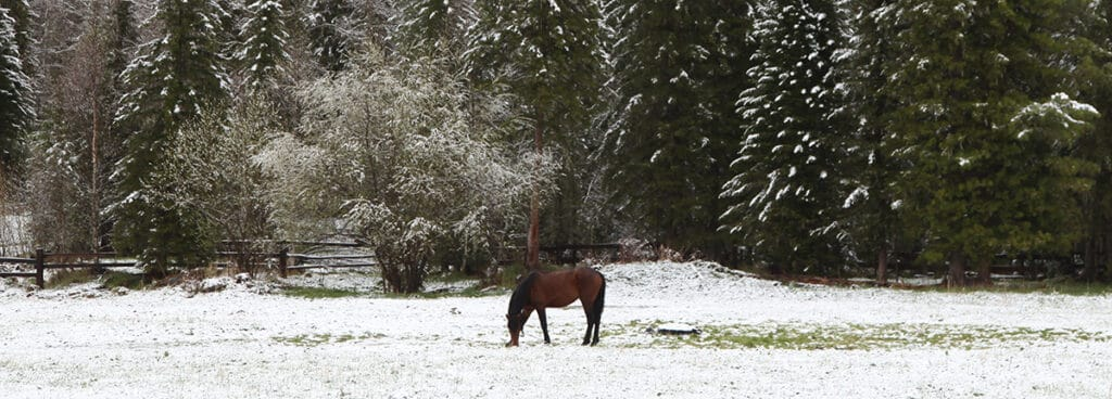 If your horse can't get to the frozen grass then you may need to feed him extra hay